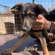 1 Tier in Rumänien durch Namenspatenschaft Julika, Pro Dog Romania eV
