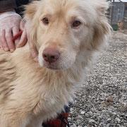 1 Tier in Rumänien durch Namenspatenschaft Apache, Pro Dog Romania eV