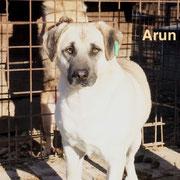 1 Tier in Rumänien durch Namenspatenschaft Arun, Pro Dog Romania eV