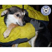 1 Hund in Rumänien durch Namenspatenschaft Püppchen, Pro Dog Romania eV