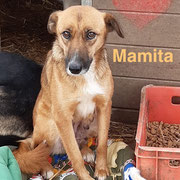 1 Tier in Rumänien durch Namenspatenschaft Mamita, Pro Dog Romania eV