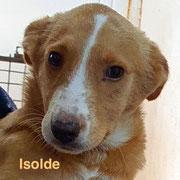 1 Tier in Rumänien durch Namenspatenschaft Isolde, Pro Dog Romania eV