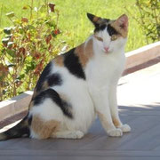 Katze Lola aus Alanya, Türkei, Hilfe für Samtpfoten & Co in Not eV