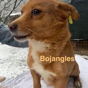 1 Tier in Rumänien durch Namenspatenschaft Bojangles, Pro Dog Romania eV