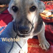 1 Tier in Rumänien durch Namenspatenschaft Wichtel, Pro Dog Romania eV