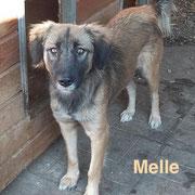 1 Tier in Rumänien durch Namenspatenschaft Melle, Pro Dog Romania eV