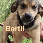 1 Tier in Rumänien durch Namenspatenschaft Bertil, Pro Dog Romania eV