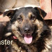 1 Tier in Rumänien durch Namenspatenschaft Master Pro Dog Romania eV