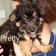 1 Tier in Rumänien durch Namenspatenschaft Pretty, Pro Dog Romania eV