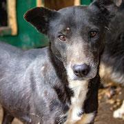 1 Tier in Rumänien durch Namenspatenschaft Veronica Pro Dog Romania eV