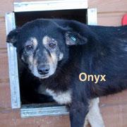 1 Tier in Rumänien durch Namenspatenschaft Onyx Pro Dog Romania eV