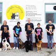 40 Tiere in Rumänien über Tierhilfe Hoffnung eV