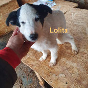 1 Tier in Rumänien durch Namenspatenschaft Lolita, Pro Dog Romania eV