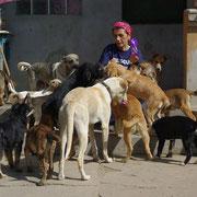 13 Tiere in Tantava/Rumänien über Carmen Dodi