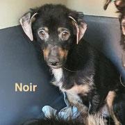 1 Tier in Rumänien durch Namenspatenschaft Noir, Pro Dog Romania eV
