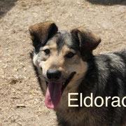 1 Tier in Rumänien durch Namenspatenschaft Eldorado Pro Dog Romania eV