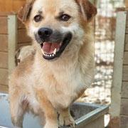 1 Tier in Rumänien durch Namenspatenschaft Hinnerk, Pro Dog Romania eV