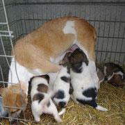 3 Hunde in Tantava, Rumänien über Carmen Dodi