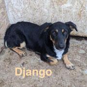 1 Tier in Rumänien durch Namenspatenschaft Django, Pro Dog Romania eV