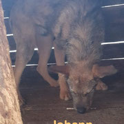 1 Tier in Rumänien durch Namenspatenschaft Johann, Pro Dog Romania eV