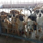 50 Tiere in Rumänien über Tierhilfe Hoffnung eV