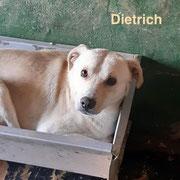 1 Tier in Rumänien durch Namenspatenschaft Dietrich, Pro Dog Romania eV