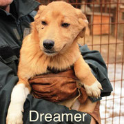 1 Tier in Rumänien durch Namenspatenschaft Dreamer, Pro Dog Romania eV