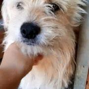 1 Tier in Rumänien durch Namenspatenschaft Flokati Pro Dog Romania eV