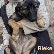 1 Tier in Rumänien durch Namenspatenschaft Rieke, Pro Dog Romania eV