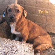 1 Tier in Rumänien durch Namenspatenschaft Telly, Pro Dog Romania eV