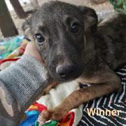 1 Tier in Rumänien durch Namenspatenschaft Winner, Pro Dog Romania eV