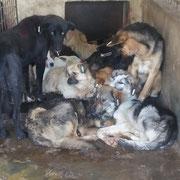 2 Hunde in Rumänien über Pro Dog Romania eV