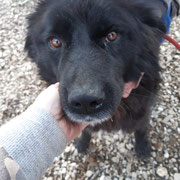 1 Tier in Rumänien durch Namenspatenschaft Delilah, Pro Dog Romania eV