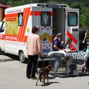 15 Tiere in Rumänien über Tierhilfe Hoffnung eV