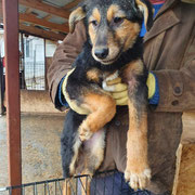 1 Tier in Rumänien durch Namenspatenschaft Lucretia, Pro Dog Romania eV