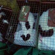 1 Streunerkatze auf Malta, Katzenhilfe Olli eV