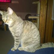 Katze Bonnie von Familie S.  (Notfallkasse)