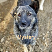 1 Tier in Rumänien durch Namenspatenschaft Mystery, Pro Dog Romania eV