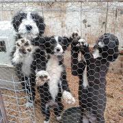 28 Tiere in Sibiu/Rumänien über Freie Tierhilfe, Kleve