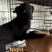 1 Tier in Rumänien durch Namenspatenschaft Night, Pro Dog Romania eV