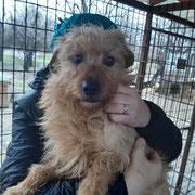 1 Tier in Rumänien durch Namenspatenschaft Rasmus, Pro Dog Romania eV