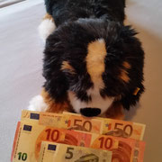 6 Hunde im Rumänien über Pro Dog Romania eV