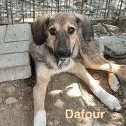 1 Tier in Rumänien durch Namenspatenschaft Dafour, Pro Dog Romania eV
