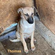 1 Tier in Rumänien durch Namenspatenschaft Thomas, Pro Dog Romania eV