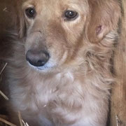 1 Tier in Rumänien durch Namenpatenschaft  Sanso, Pro Dog Romania eV