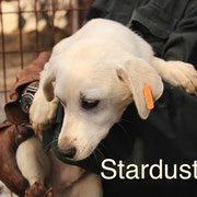 1 Tier in Rumänien durch Namenspatenschaft Stardust, Pro Dog Romania eV
