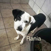 1 Tier in Rumänien durch Namenspatenschaft Rania, Pro Dog Romania eV