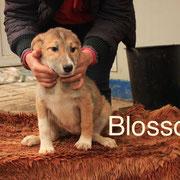 1 Tier in Rumänien durch Namenspatenschaft Blossom, Pro Dog Romania eV