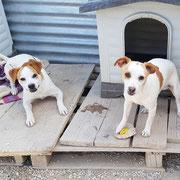 Rüden Lucky und Sam, Refugio Esperanza, Crevillente, Spanien