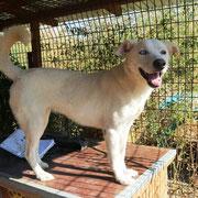 1 Tier in Rumänien durch Namenspatenschaft Cream Pro Dog Romania eV